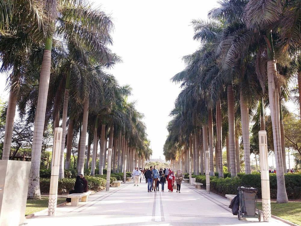 The Places I've Been Today Azhar_park Palm Trees Trees And Sky Cairo Egypt