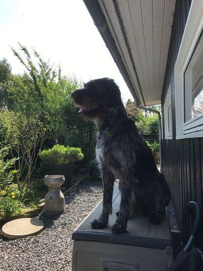Dog Pets One Animal Domestic Animals Animal Themes Sitting Day Mammal Window No People Outdoors Tree Sky EyeEm Selects Pet Portraits
