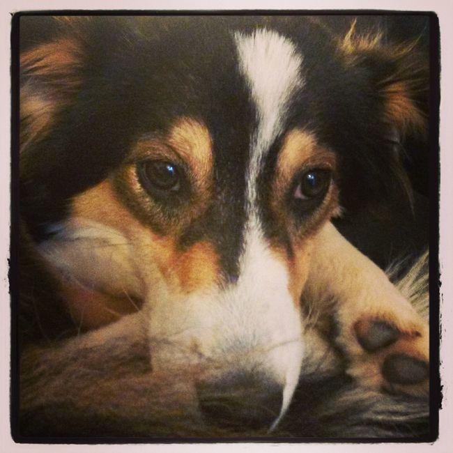 Dog Animals Animal_collection Billerbeck