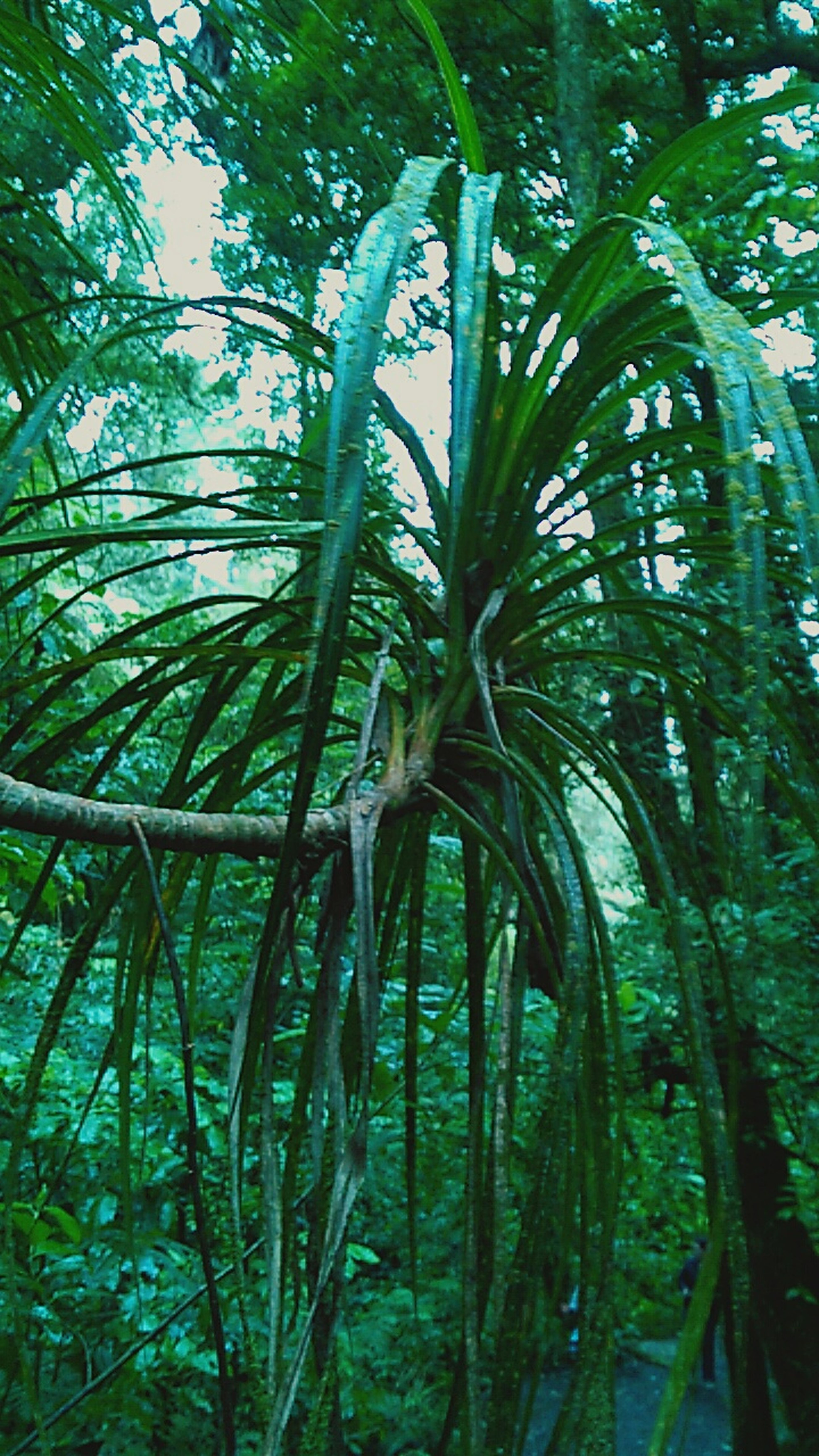 Natute walk Natureporn EyeEm Nature Lover Nature Trees Peace Walkimg Lleaves Forest Naturephotography Mobilephotography