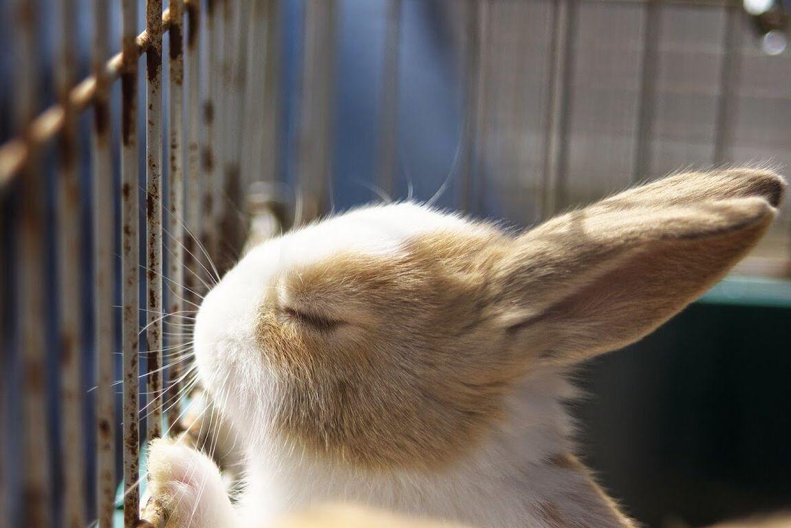 Animals Rabbit Eating