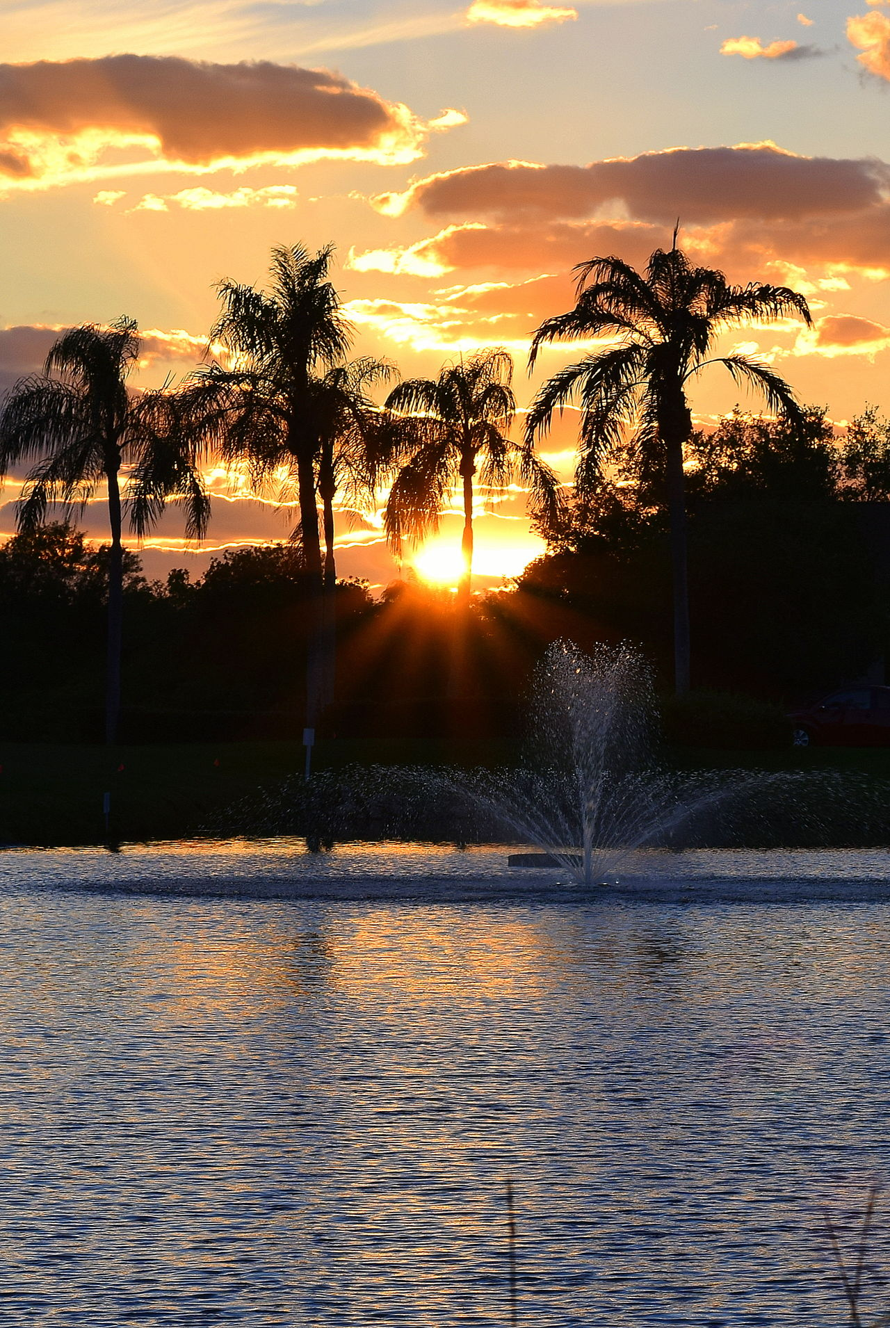 Sunset in Venice Florida Beauty In Nature Fountain Outdoors Palm Tree Palm Tree Silhouette Palm Trees Scenics Silhouette Sky Sun Sunset Sunset Silhouettes Tree Water Water Fountain