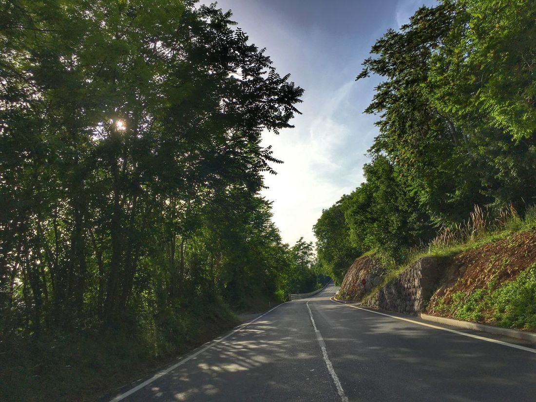 Perspectives On Nature Tree Road The Way Forward Day Transportation Nature No People Sky Tranquility Growth Green Color Outdoors Tranquil Scene Scenics Beauty In Nature Landscape