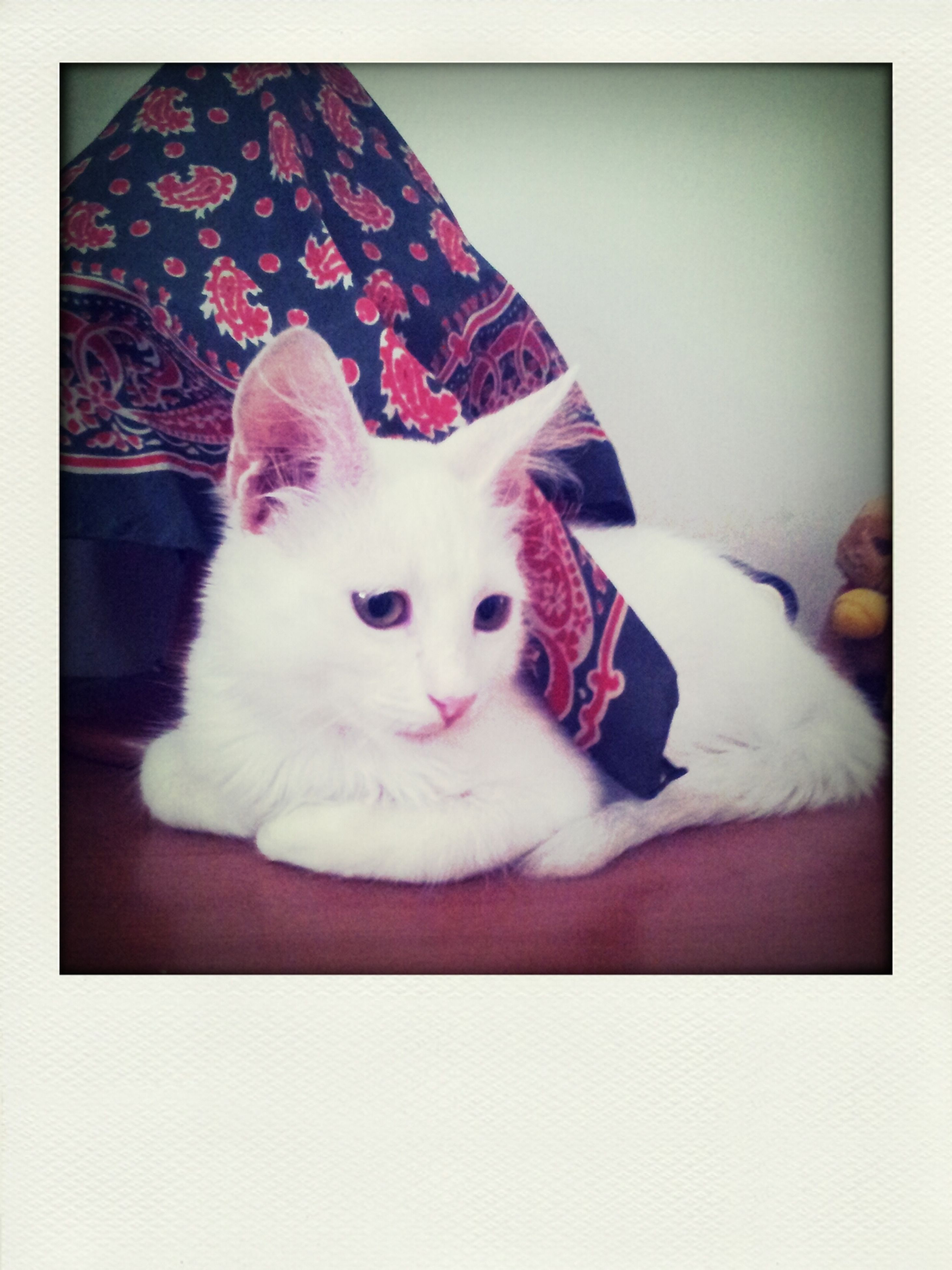 pets, domestic animals, animal themes, indoors, one animal, mammal, domestic cat, cat, white color, relaxation, transfer print, bed, portrait, looking at camera, lying down, resting, feline, auto post production filter, sofa, home interior