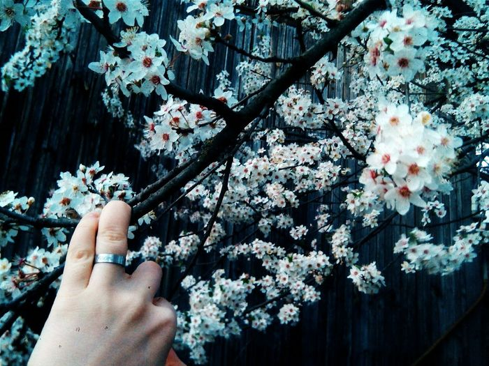 Argun..❤Human Hand Human Body Part One Person Tree Human Finger Holding Real People Day Branch Outdoors One Woman Only Adults Only People Only Women Close-up Nature Adult Blue Springtime Blossom Plant Outdoors Growth Nature Beauty In Nature Sky Fragility Scenics Tranquil Scene No People Chechen Republic Flower Bahar Geldi Bahar Argun Spring Flowers Spring 2017