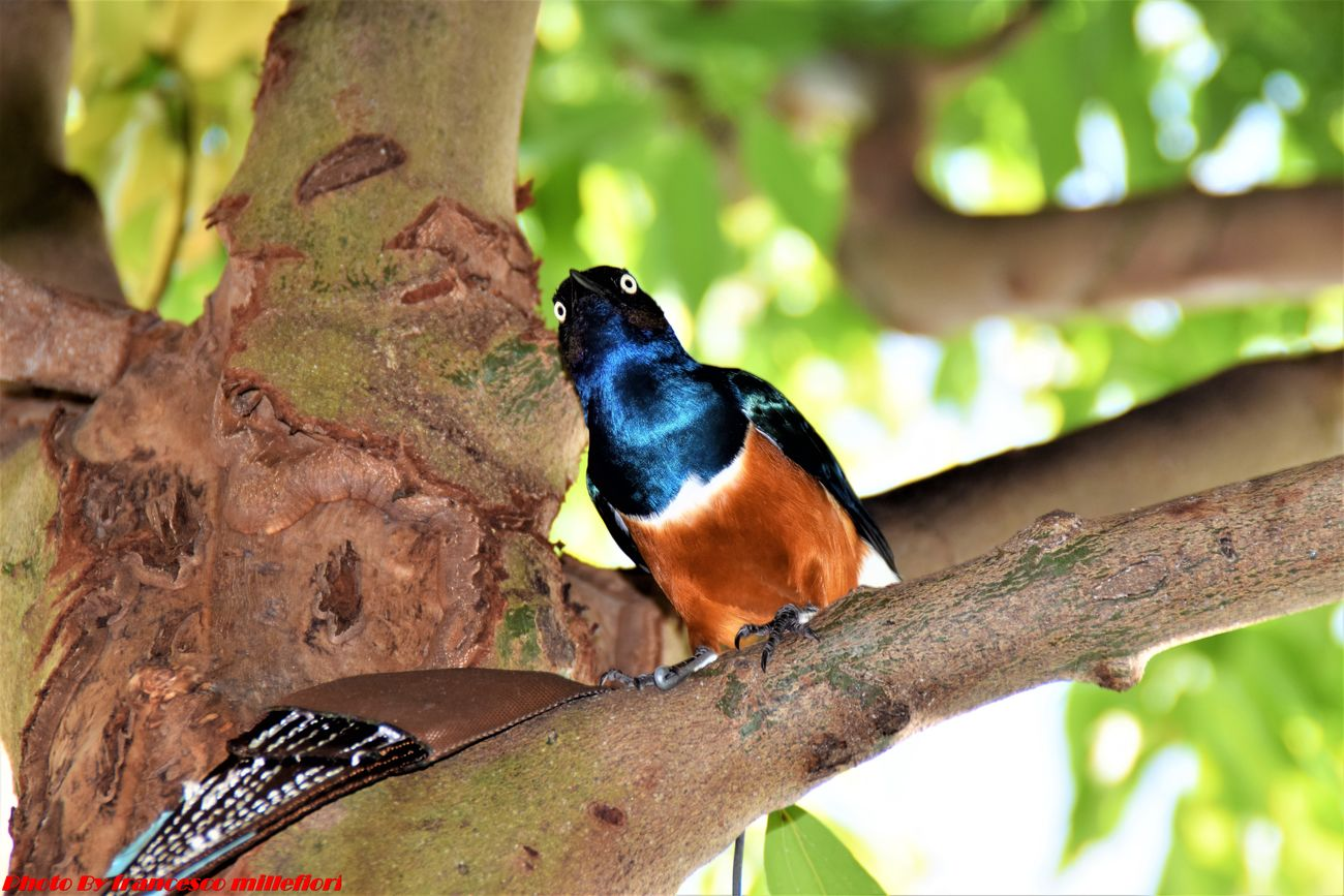 Bird One Animal Animal Wildlife Animal Themes Beauty In Nature Street Photography