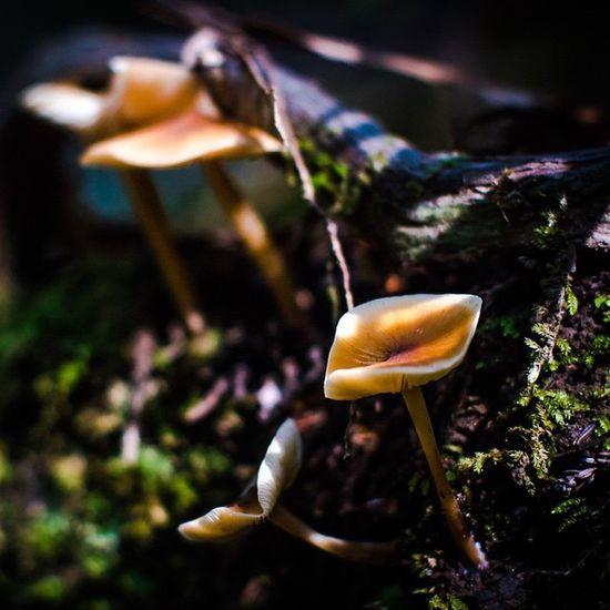   Fungus   GH4 Panasonic  Mushroom Norcal Lowkey  Shadows Muir Mountains Redwoods Magic Psilocybin Trip Experience Digital Enlighten Path Dirt Mud Spores Fungus Acid SF Bayarea