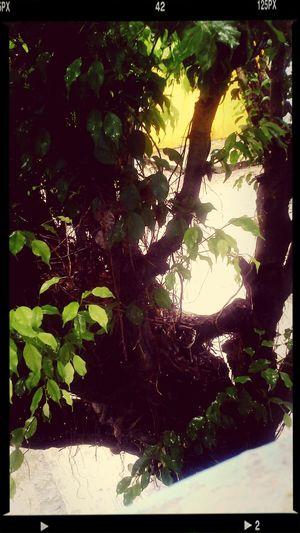 naturaleza Actitud De Lunes!