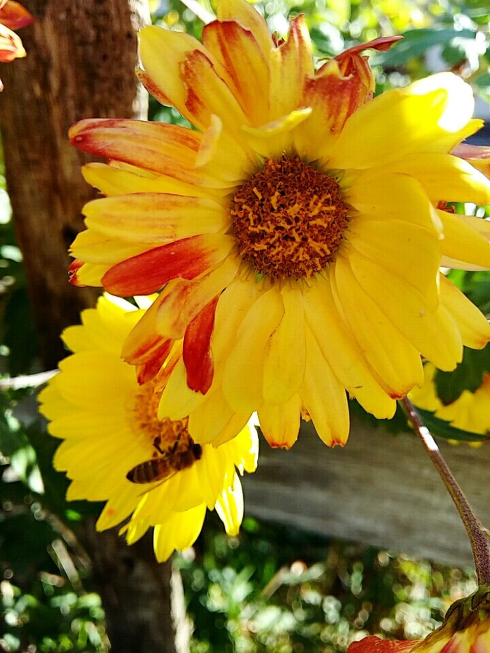 flower, petal, yellow, fragility, growth, flower head, beauty in nature, nature, freshness, plant, outdoors, pollen, day, no people, blooming, close-up, springtime