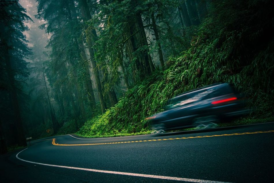 Scenic Redwood Highway in California, USA Blurred Motion Car Cars Day Land Vehicle Light Trail Long Exposure Motion Mountain Nature No People On The Move Outdoors Redwood Redwood Trees Road Road Speed Speeding Transportation Tree Winding Road