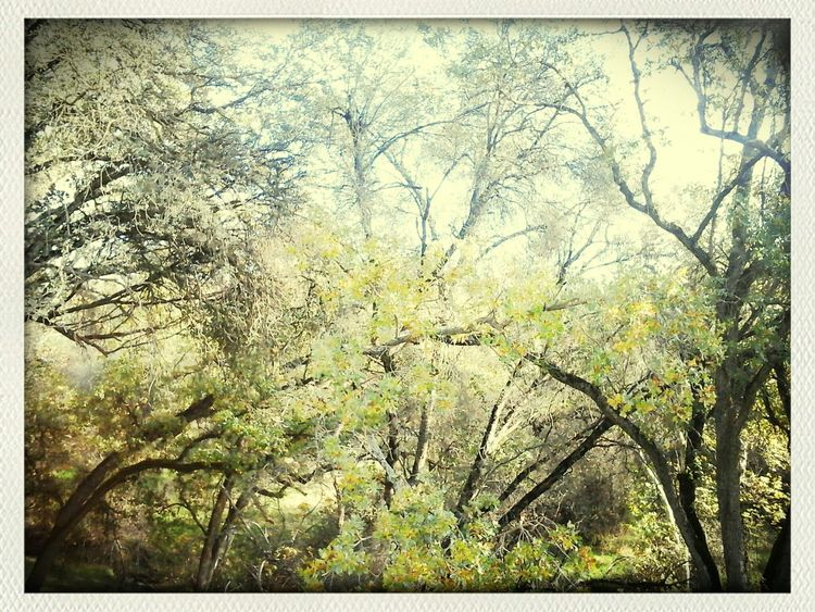 Nature_collection For The Love Of Trees ~ Fall Colors