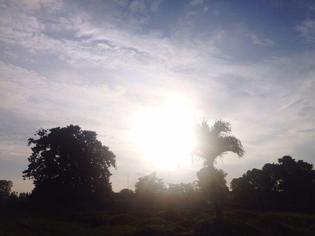 Tree Silhouette Sun Tranquil Scene Sunlight Landscape Tranquility Scenics Sky Beauty In Nature Solitude Growth Cloud Nature Outline Bright Field Sunbeam Day Non-urban Scene