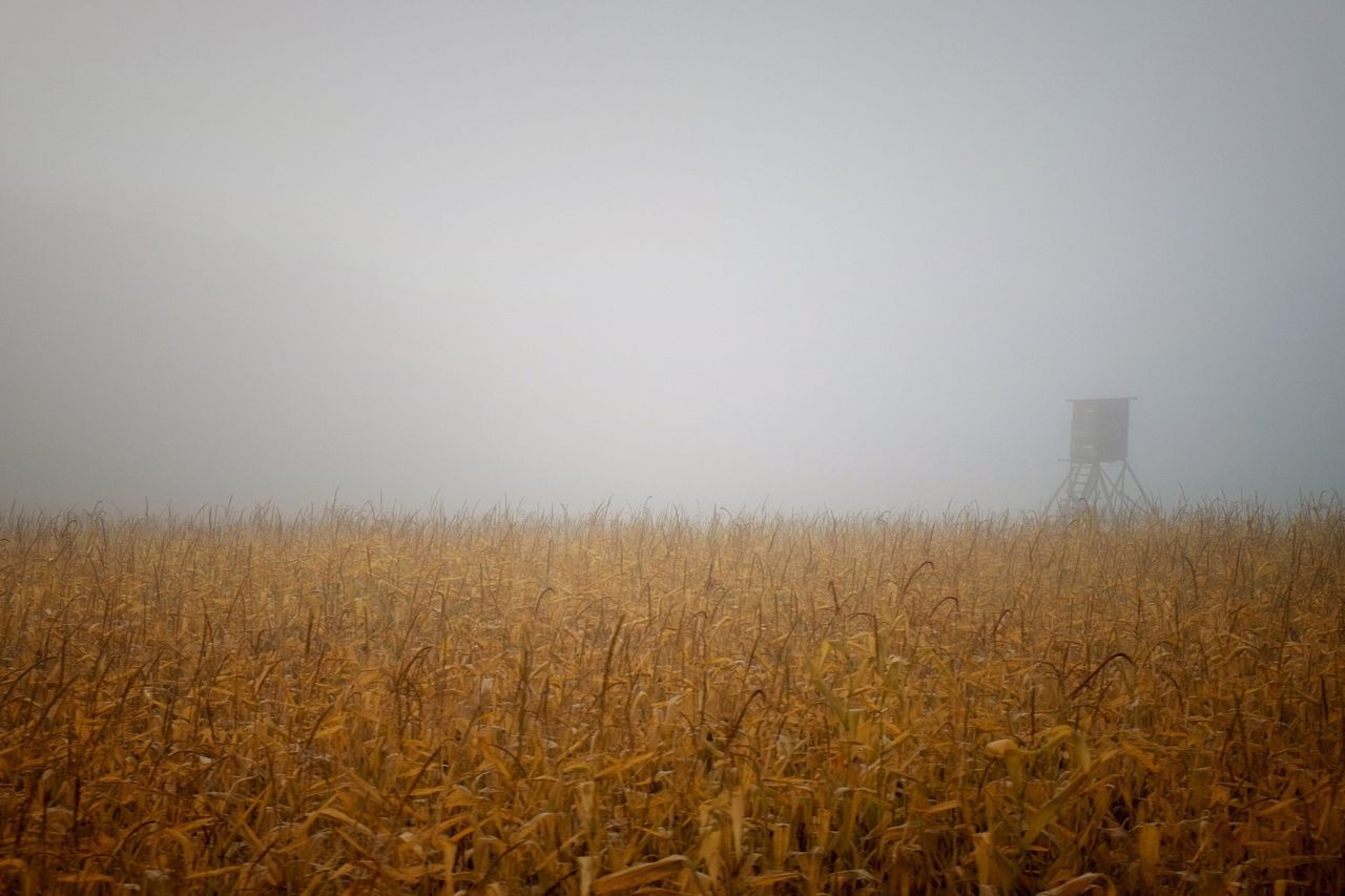 Golden Oktober II Tranquil Scene Tranquility Scenics Copy Space Yellow Growth Field Beauty In Nature Fog Nature Rural Scene Agriculture Foggy Non-urban Scene Day Farm Sky No People Tourism Remote