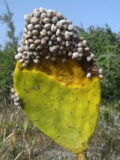Cactus Leaf Snails Beach Summertime Nature Beauty In Nature Green Color Close-up
