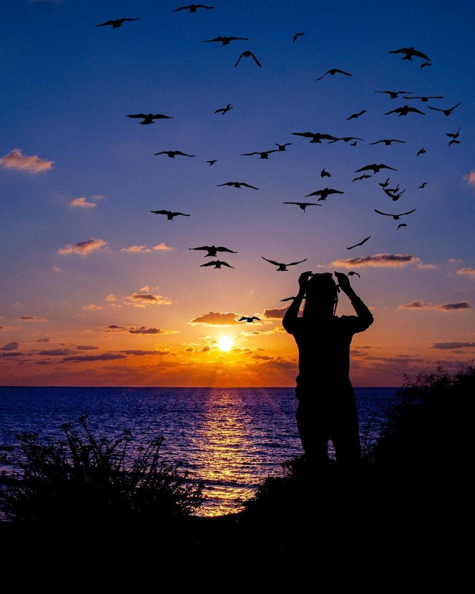 Silhouette Dreams Sunset Sea One Person Silhouette Nature Beauty In Nature Sky One Man Only Outdoors Beach Ocean View Fantasy Silhouette_collection Silhoutte Photography Silhouettes Birds Silhouette Birds Birds In Flight Birds Flying Clouds And Sky Cloudporn Silouette & Sky Ocean Woman Women Sillouette
