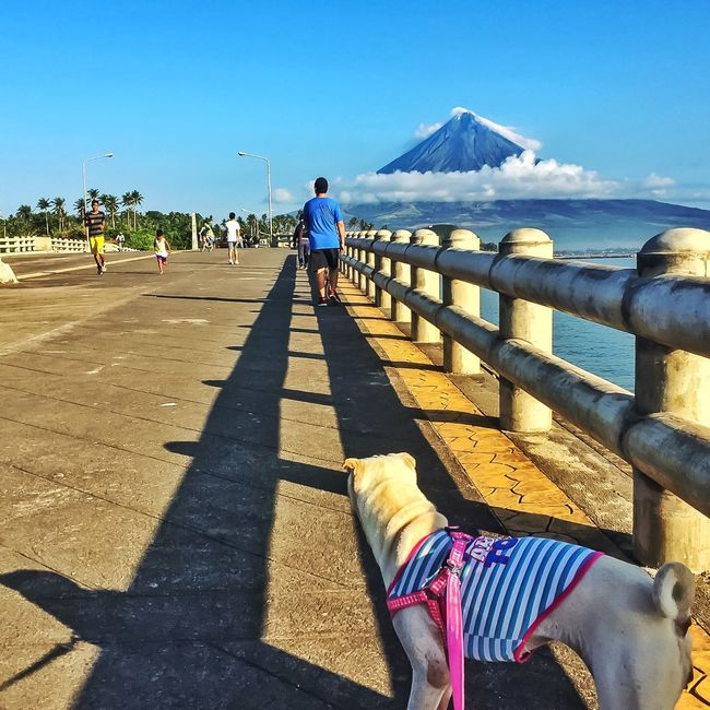Looking onward .... Duchess is wondering why we are not yet following Duke and my cousin... Am still taking their picture. Background is famous Mayon Volcano Hello World Taking Photos Strolling On A Hot Day Walking The Dogs TheSharpDukeandDuchess Sharpei Sharpeis Sharpeilovers Enjoying Life Mayon Volcano Philippines MayonVolcano😍🌋 Legazpi City LegazpiCityAlbay Albay Nature Photography LLLimages Iphoneonly Iphone6