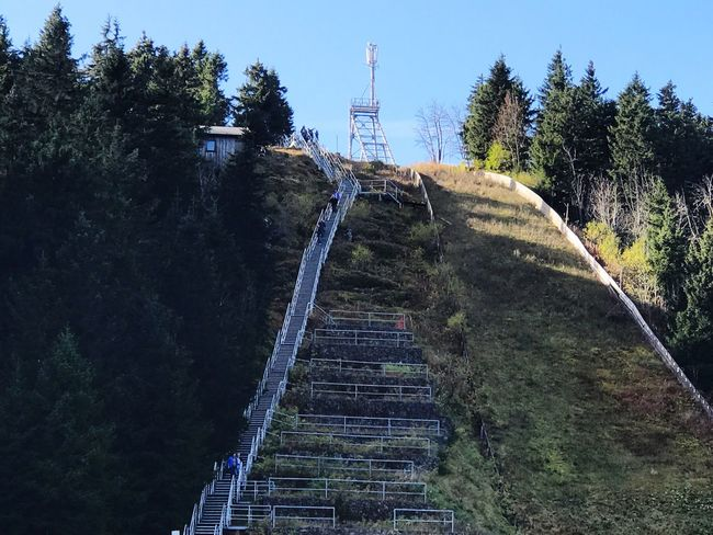Skischanze im Harz Tree Built Structure Day Steps Architecture Steps And Staircases Outdoors The Way Forward No People Growth Nature Sky