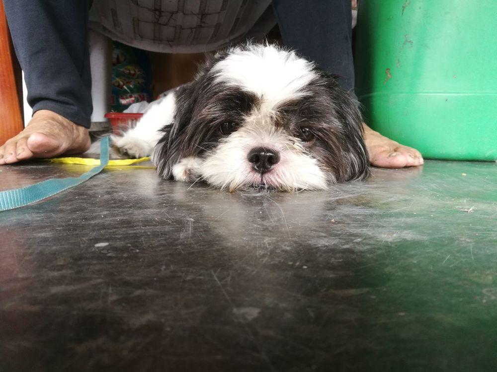 Dog Pets Indoors  Relax EyeEm Nature Lover Huawei Fans Huawei Honor8 Honor8 EyeEm Gallery EyeEm Best Shots EyeEm Sell Cute