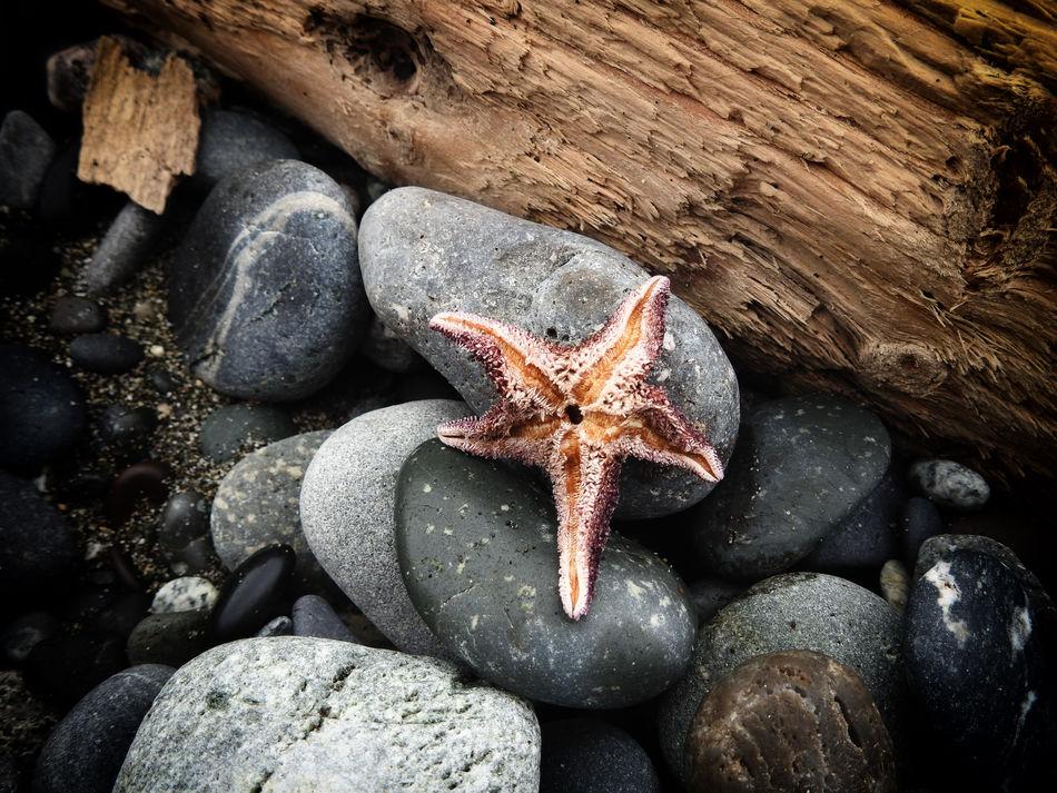 Beached Drift Wood  Drift Wood On Beach Ocean Rock Rocks Sea Starfish  Starfish At Beach Wood