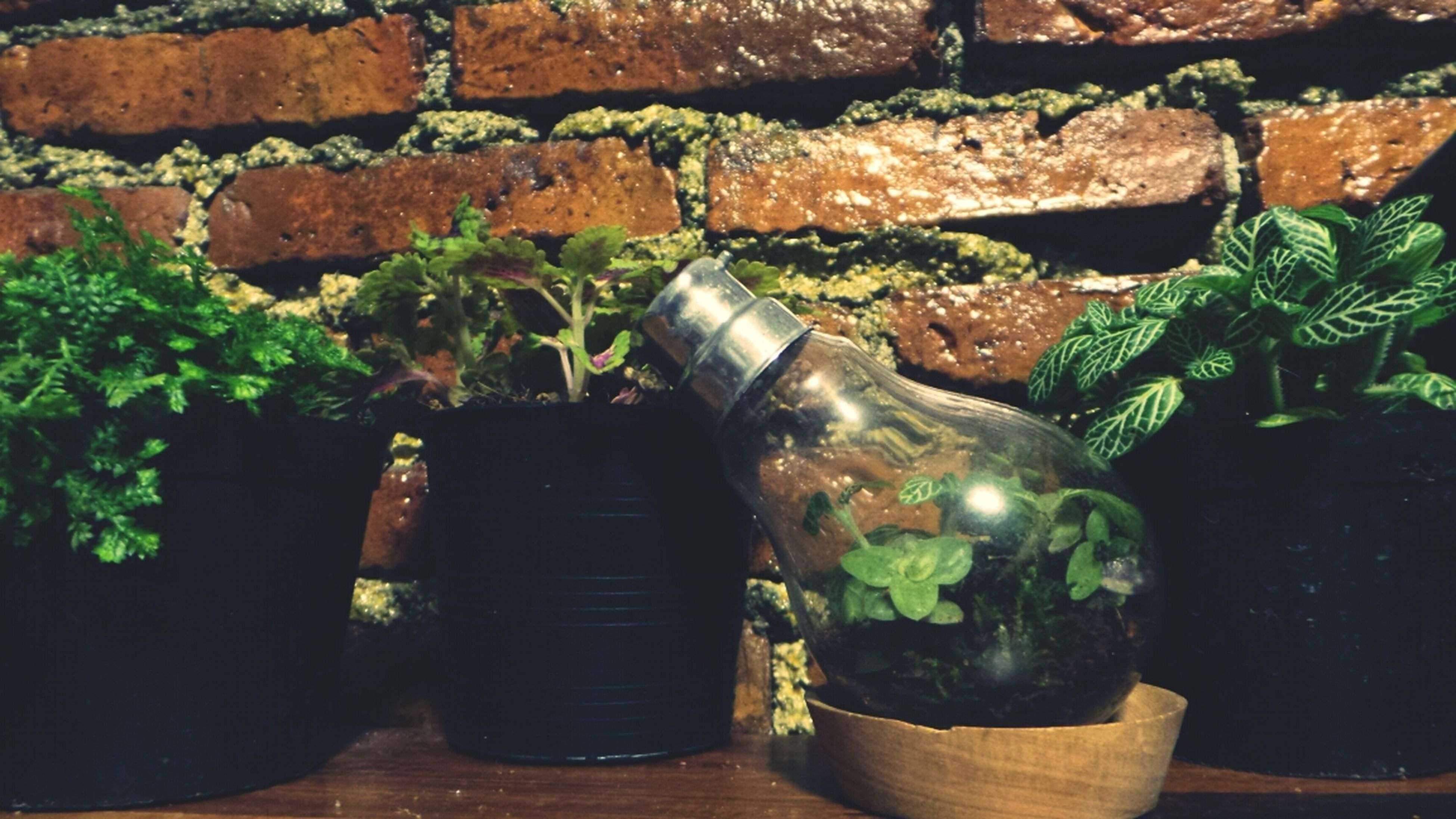 potted plant, indoors, green color, close-up, plant, wall - building feature, high angle view, still life, old, no people, metal, day, table, growth, leaf, wood - material, container, bottle, weathered