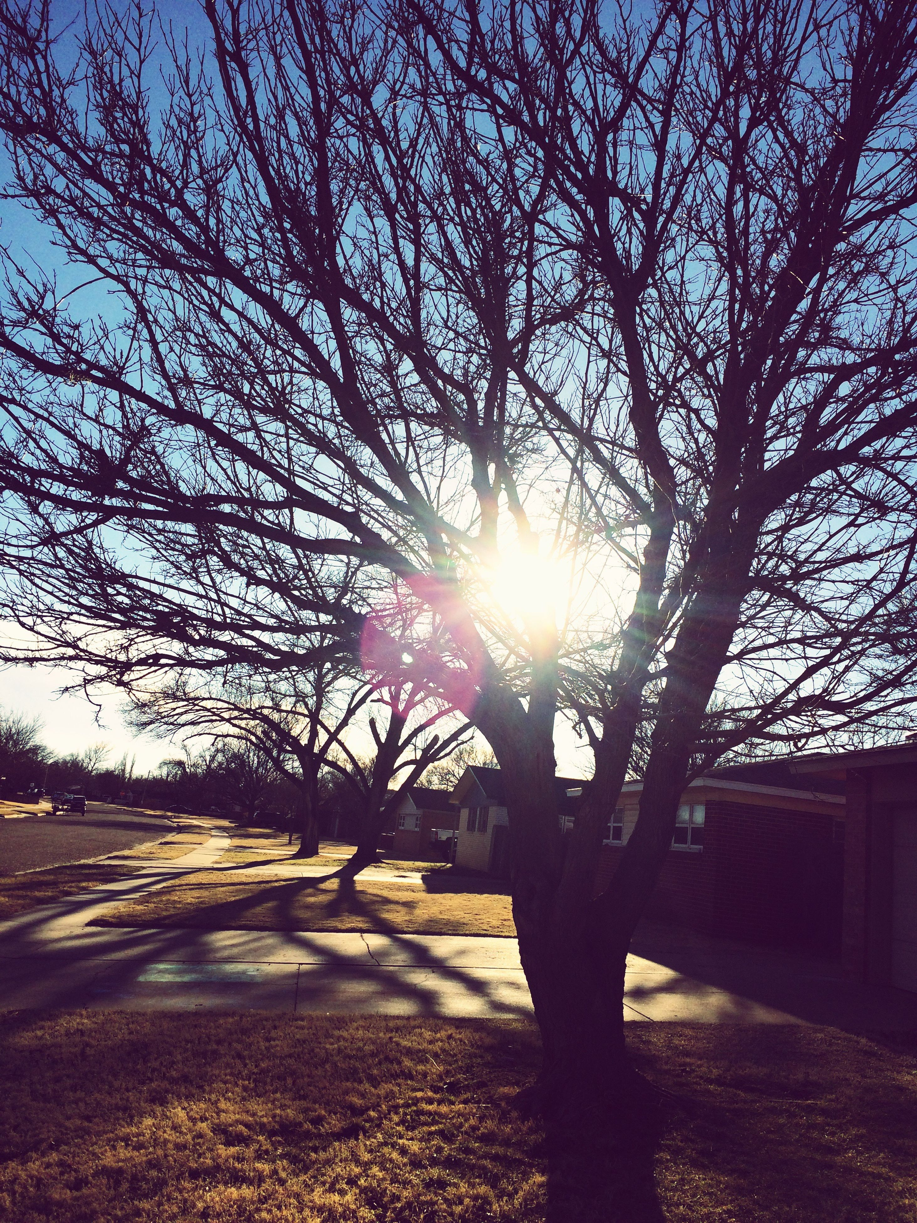 sunset, sunlight, tree, sun, sky, lens flare, nature, sunbeam, no people, outdoors, beauty in nature, day, close-up