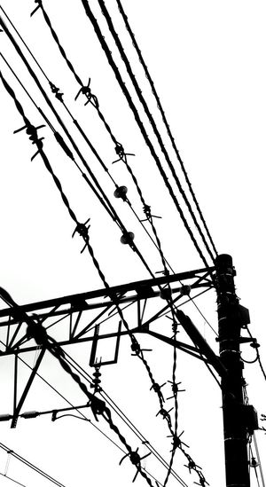 Black & White Black And White Blackandwhite Electric Wire Silhouette From My Point Of View Monochrome Lookingup Taking Photos