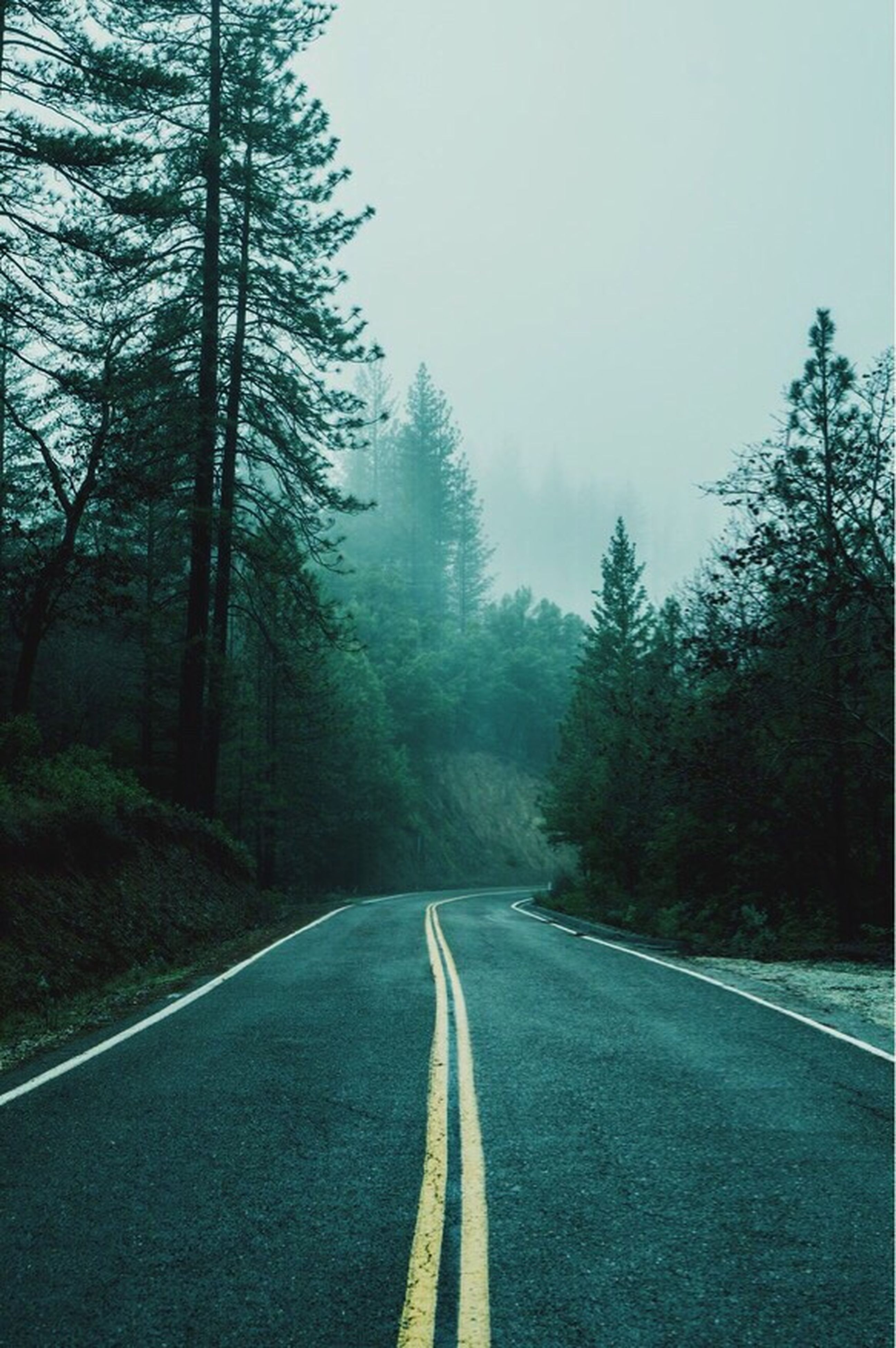 the way forward, tree, road, diminishing perspective, transportation, vanishing point, road marking, empty road, country road, empty, tranquility, sky, asphalt, tranquil scene, long, nature, street, bare tree, outdoors, no people
