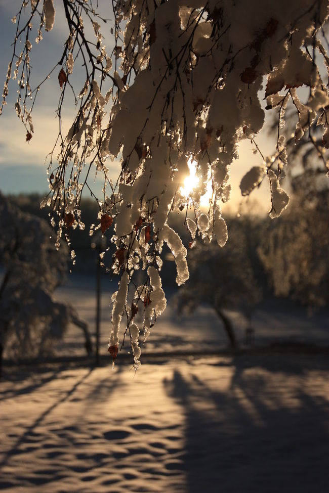 Winter Wonderland Wintertime Sunlight Sky And Clouds Eeyem Photography Ice Crystals Nature Winter Landscape Tree_collection  Icicles Winter Photography Winter_collection EeYem Best Shots Eeyem Nature Lover Snow Snow Day Snow ❄