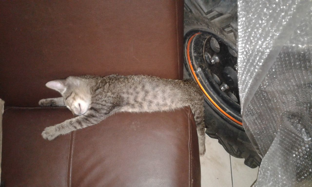 Mumio Sleeping Cat Cat Lovers Cats Of EyeEm Colombia ♥  Cat Instant Catching A Show Cat Photography Tiernos Adorable Baby Animals Cat Watching Cat♡ Cats Catsofinstagram Catlovers Dormir Dormitory