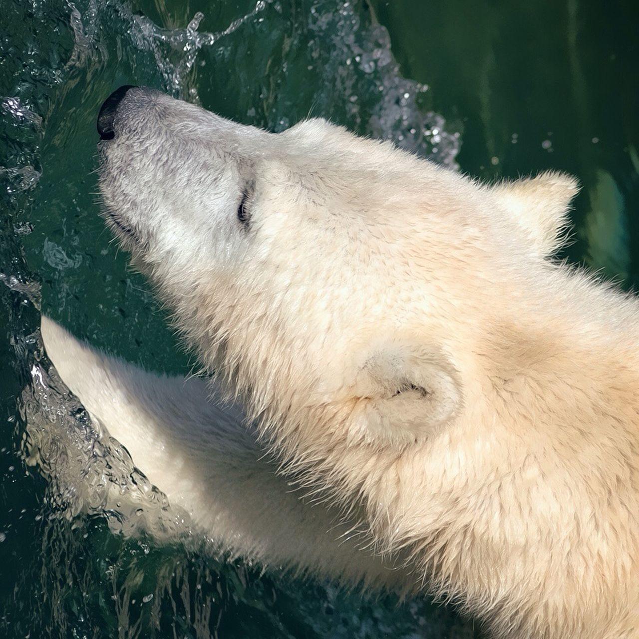 Animals Polar Bear Animales Beautiful Animals