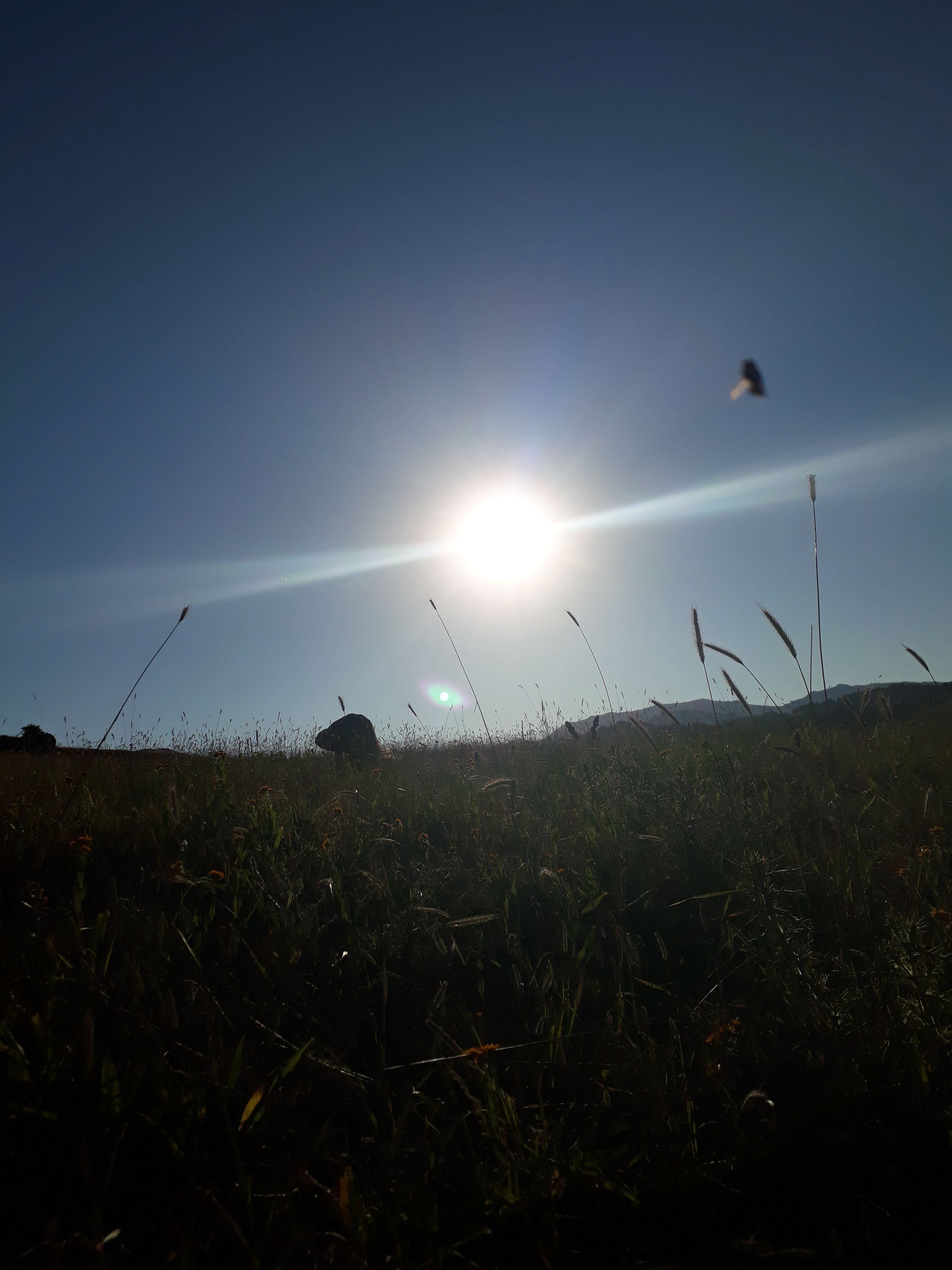 sun, nature, lens flare, sunbeam, field, sunlight, sunset, beauty in nature, growth, outdoors, animal themes, plant, no people, sky, day, flying, bird
