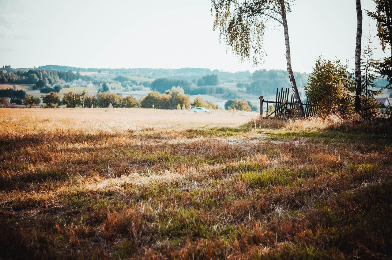 Agriculture EyeEm Selects Nature Nikon Poland Beauty In Nature Day Field Grabowiec Grass Kaszuby Kaszuby Eyeem Landscape Nature Nature_collection No People Outdoors Poland Eyeem Scenics Sky Tranquility Tree Village Village Life Village View