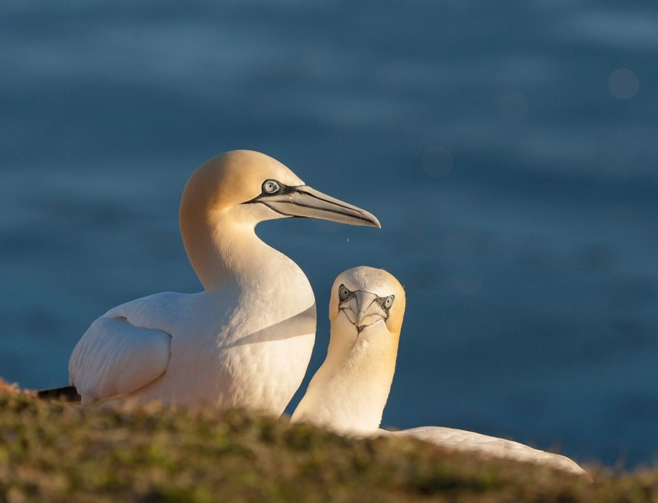 Beautiful stock photos of birds, Animal Themes, Animals In The Wild, Beauty In Nature, Bird