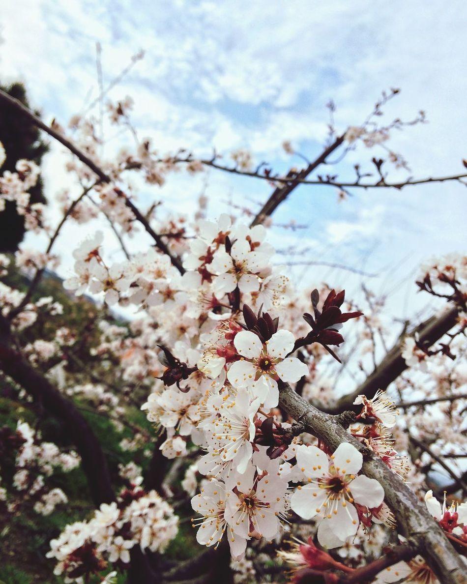 Blooming Nature Flowerpower Truelife Truestory Truelove Weekend Easter