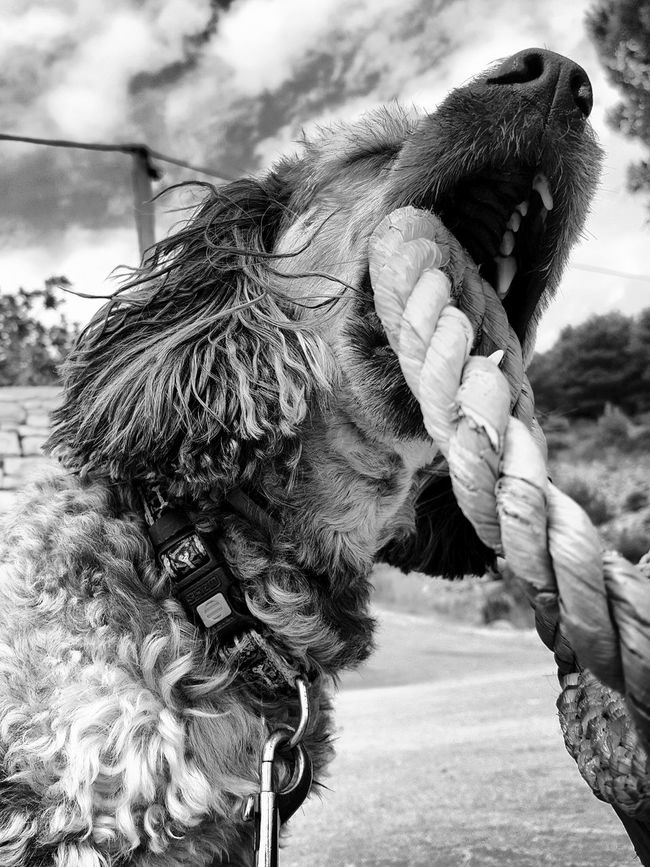 Dog Cute Pets Cute Dog  Peekapoo Croatia šolta Monochrome Photography