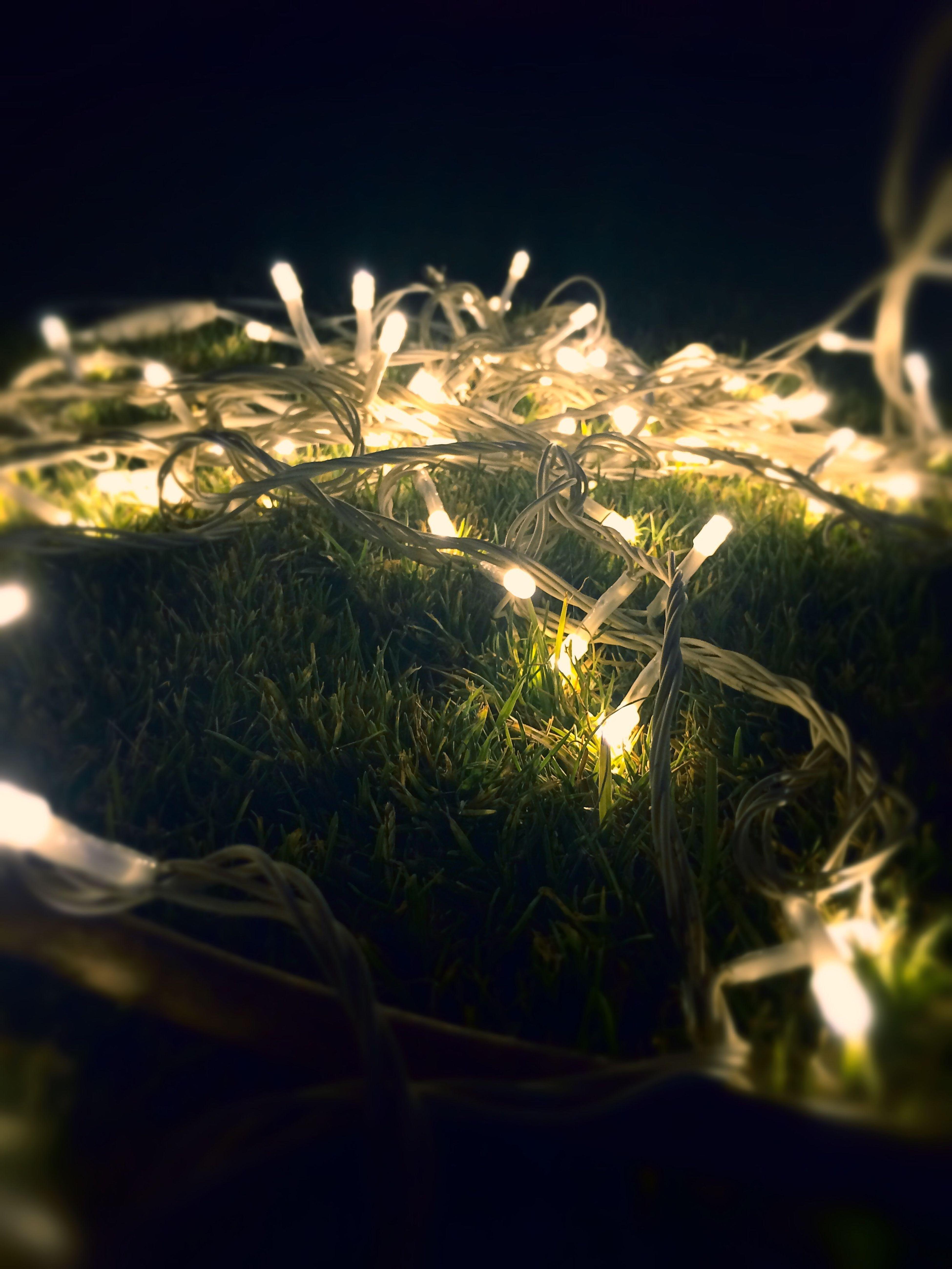 LED's On Grass 💙🔥 Night Illuminated Grass Photography Close-up Led Lights