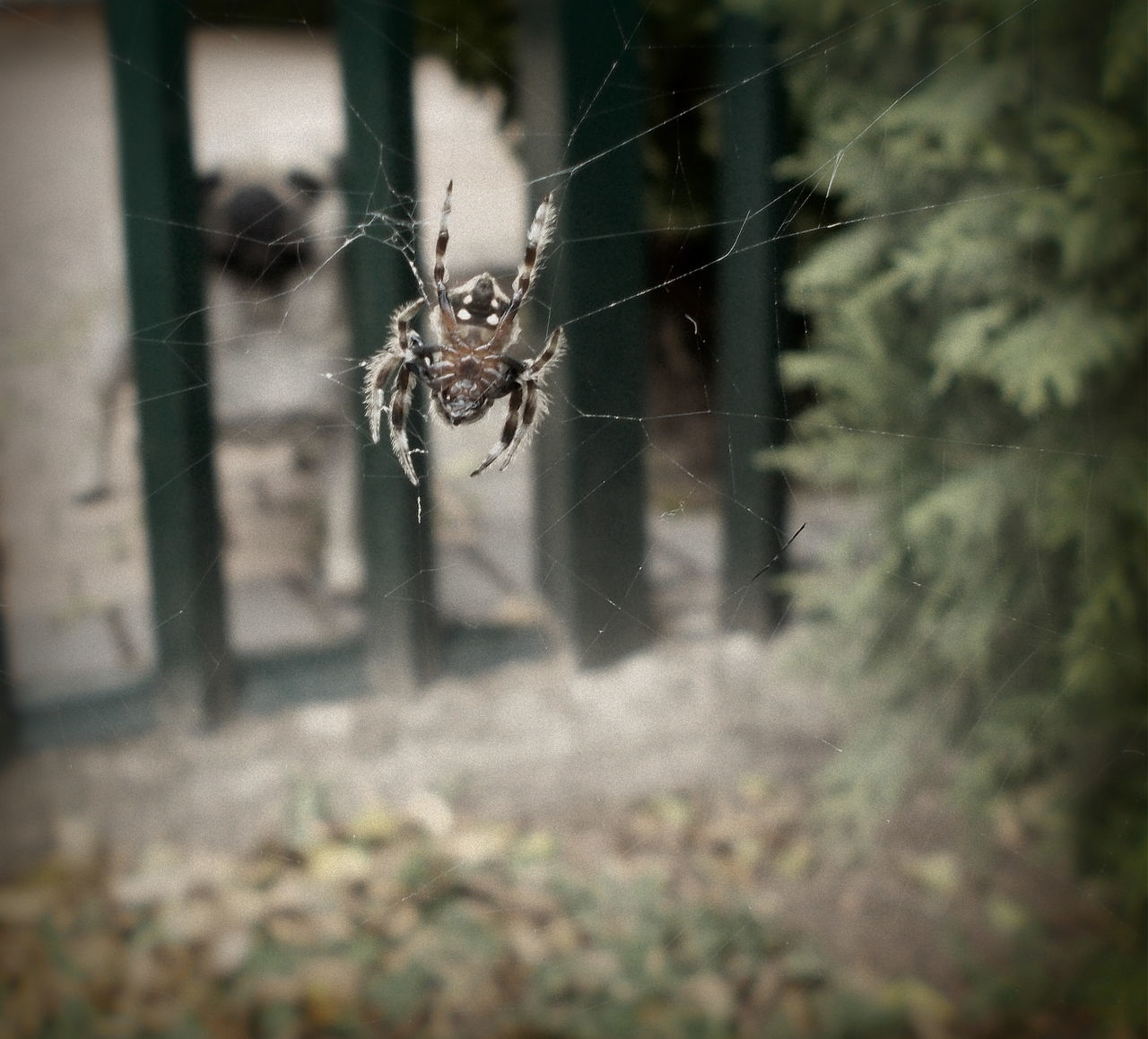 spider, one animal, spider web, animal themes, animals in the wild, insect, day, focus on foreground, outdoors, no people, animal wildlife, web, nature, close-up