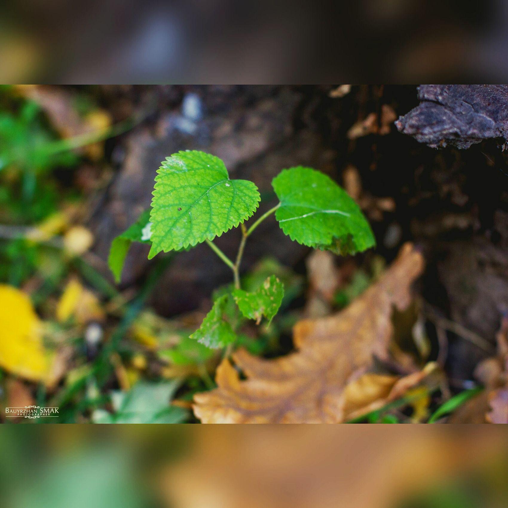 Осень 🍁🍂 🌿 ростение пейзаж и природа макросъемка