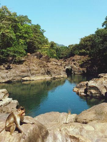 Немного райских мест Индии... гоа Индия обезьянка