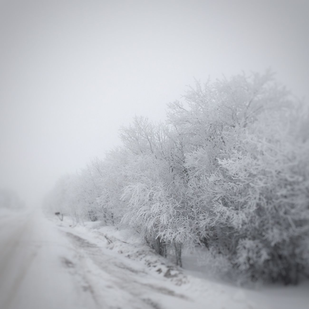 Taking the backroads on a frosty winter's day. Snow Winter White Color Foggy Tranquility
