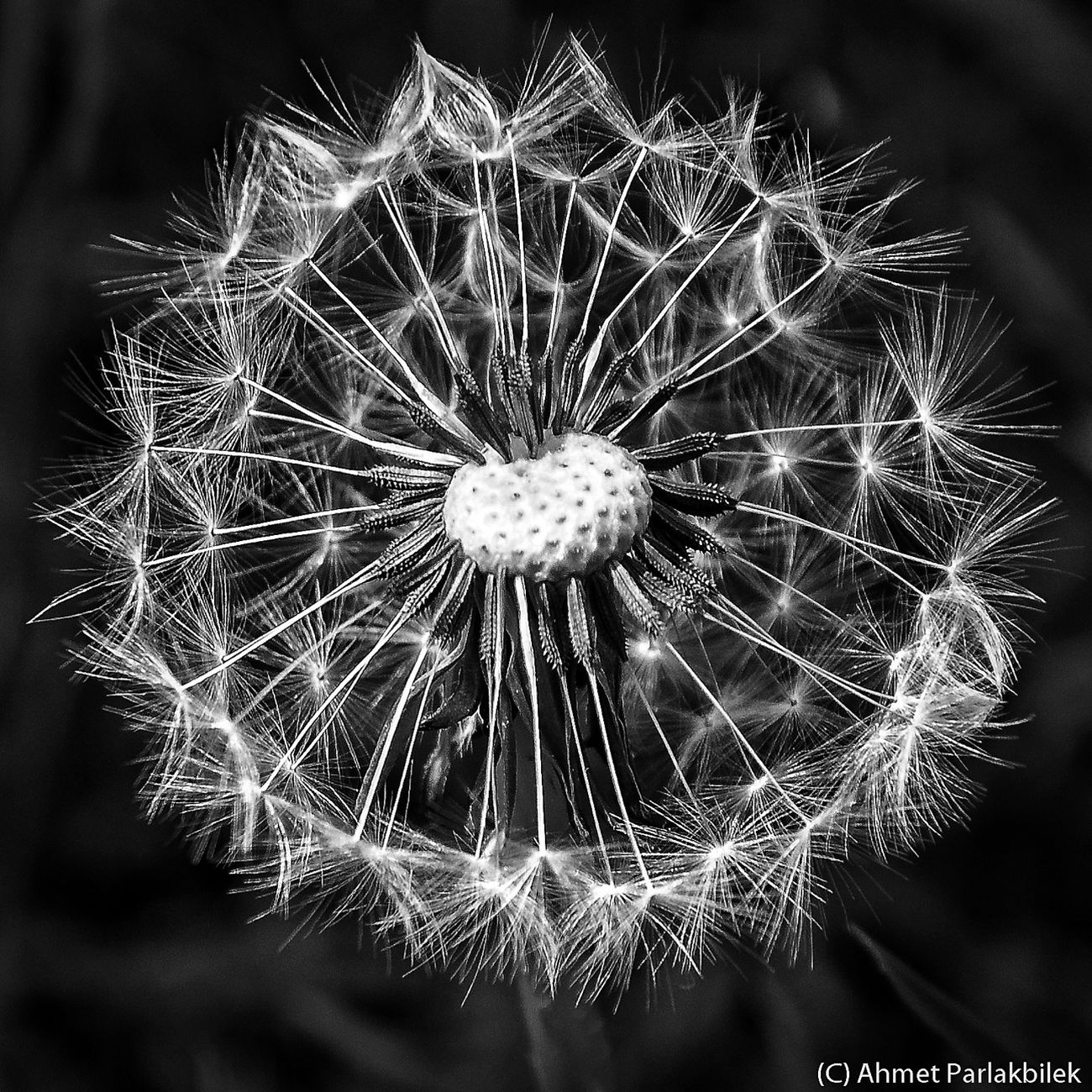 Taking Photos Dandelion EyeEm Nature Lover EyeEm Best Shots