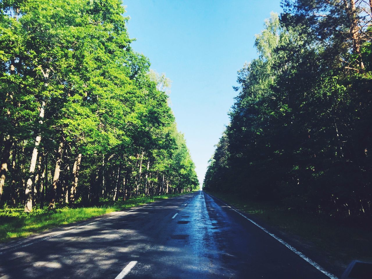 Wet road in the middle of the Forrest Nature Green Beautiful Belarus Ukraine Boarder Forrest Green Road