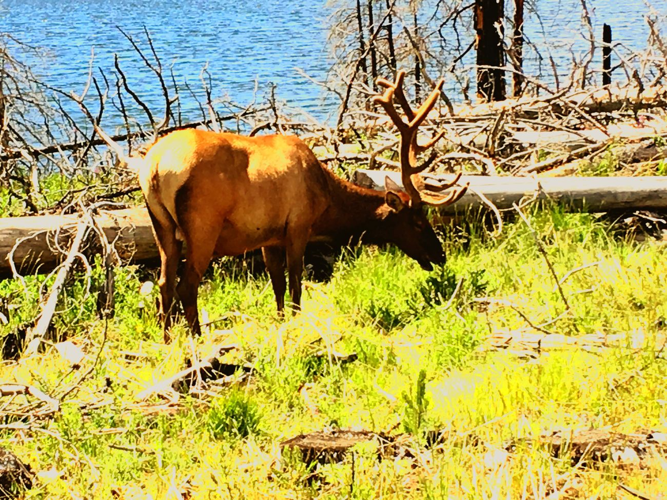 Yellowstone National Park Wildlife Photography in front of Yellowstone Lake