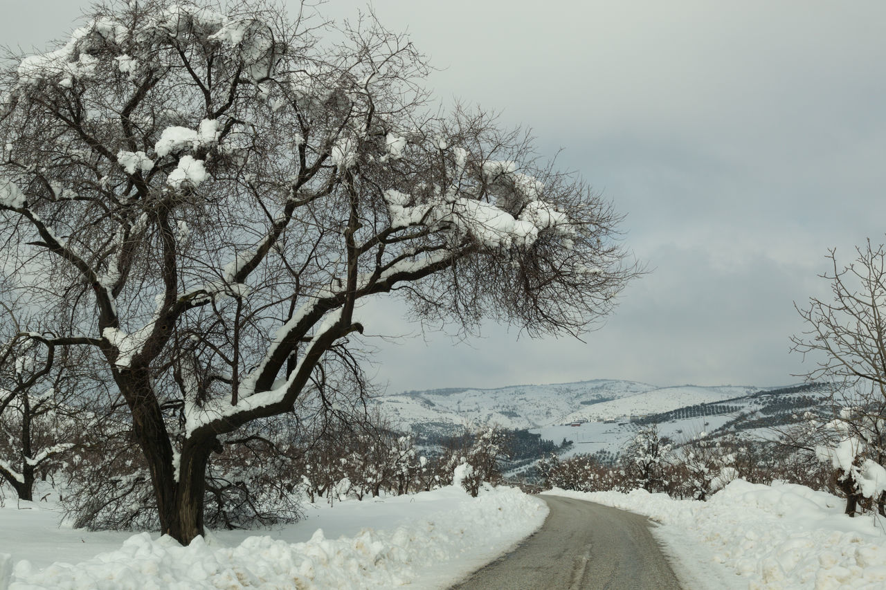 snow, winter, cold temperature, nature, weather, tree, beauty in nature, tranquility, no people, scenics, frozen, outdoors, day, sky, bare tree, landscape, branch