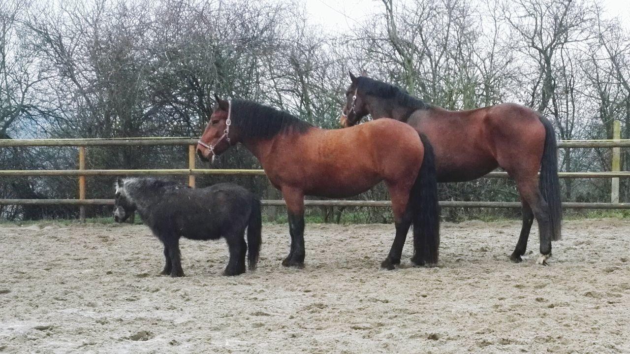 Beautiful stock photos of pony, Animal Themes, Bare Tree, Brown, Day