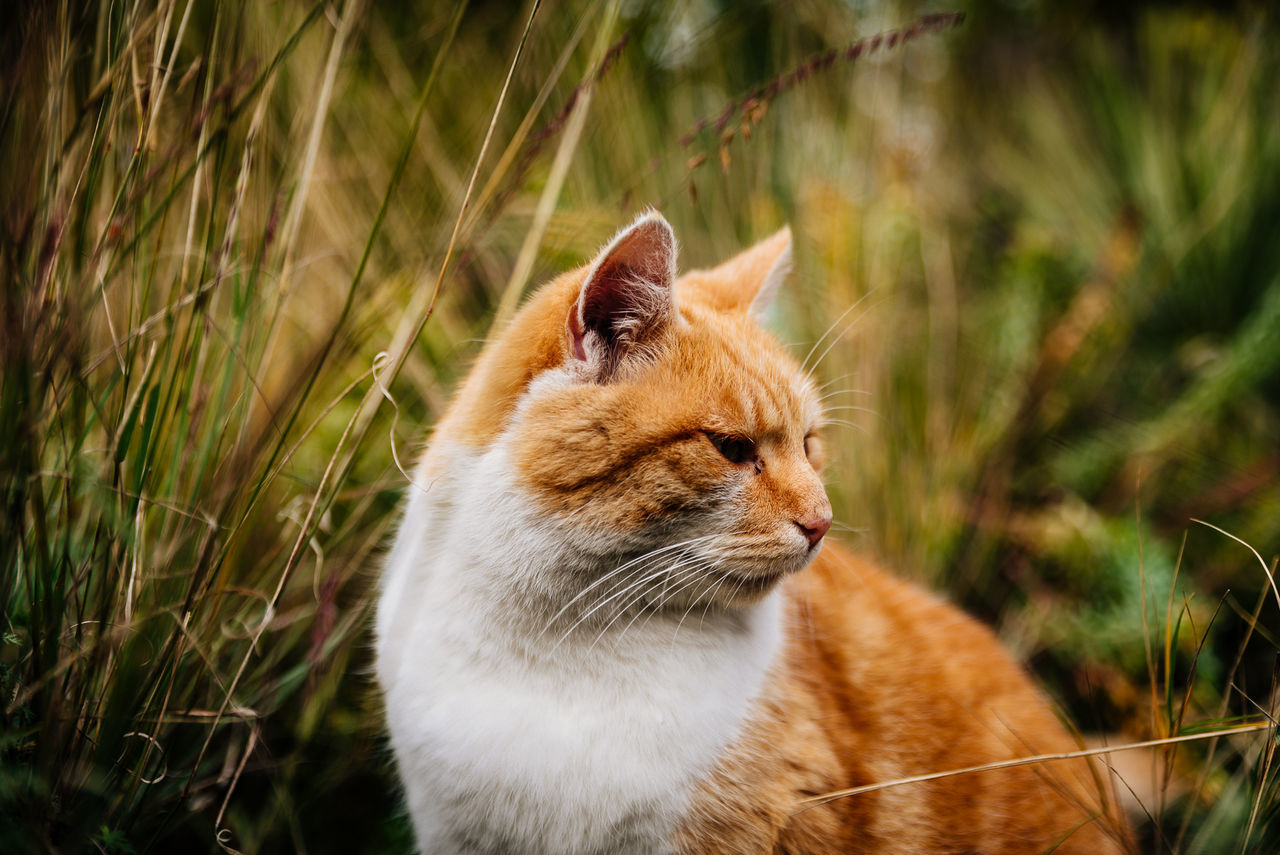A stray cat in a nearby park. I call him garfiel, my wife would call him Teddy. Maybe we shall call him Tedfield :) Animal Animal Head  Cat Character Cat Domestic Cat Feline Focus On Foreground Furball Furry Grass Mammal No People One Animal Pets Relaxation Selective Focus Sitting Teddy