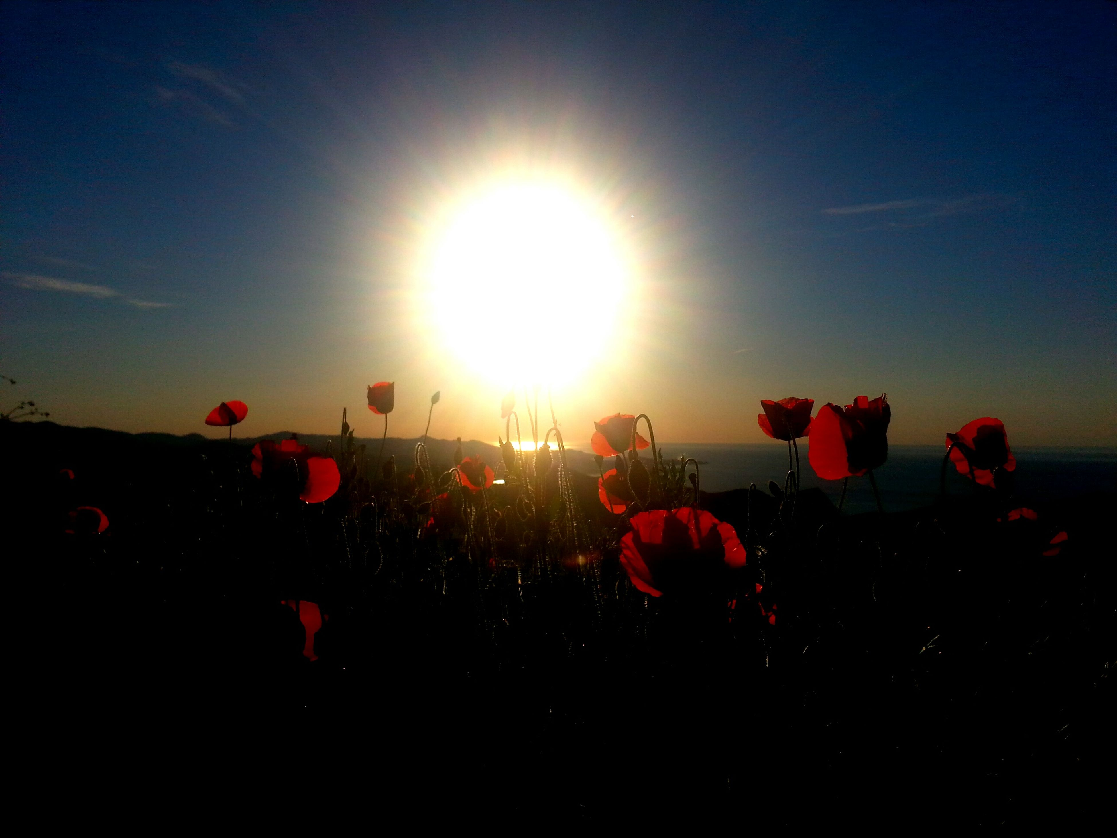 sun, lens flare, sky, sunlight, red, sunbeam, silhouette, pink color, nature, flower, beauty in nature, outdoors, sunset, low angle view, clear sky, field, copy space, bright, multi colored