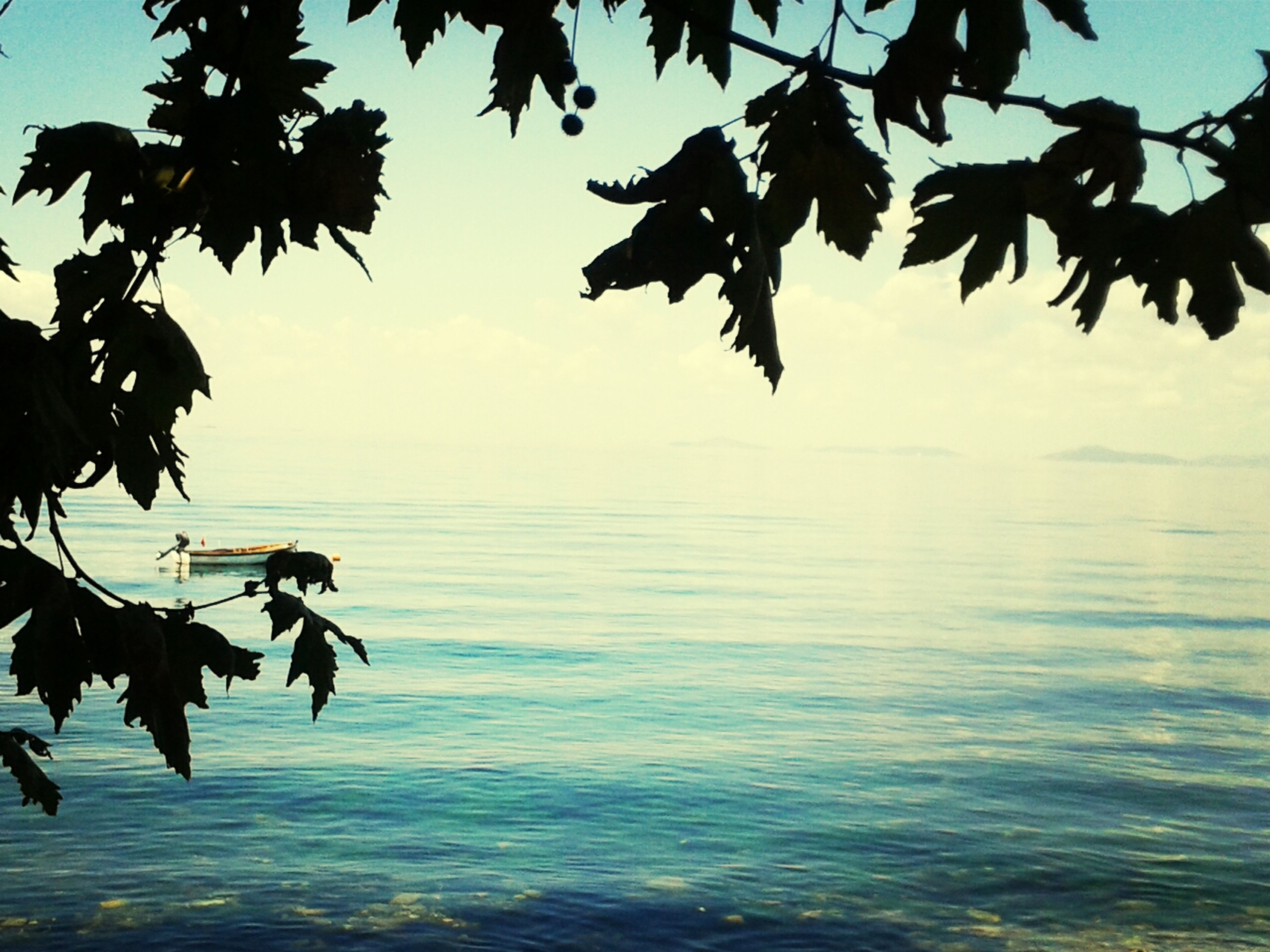 water, tranquility, waterfront, tree, sea, tranquil scene, beauty in nature, scenics, branch, sky, nature, horizon over water, rippled, lake, leaf, idyllic, blue, clear sky, outdoors, reflection