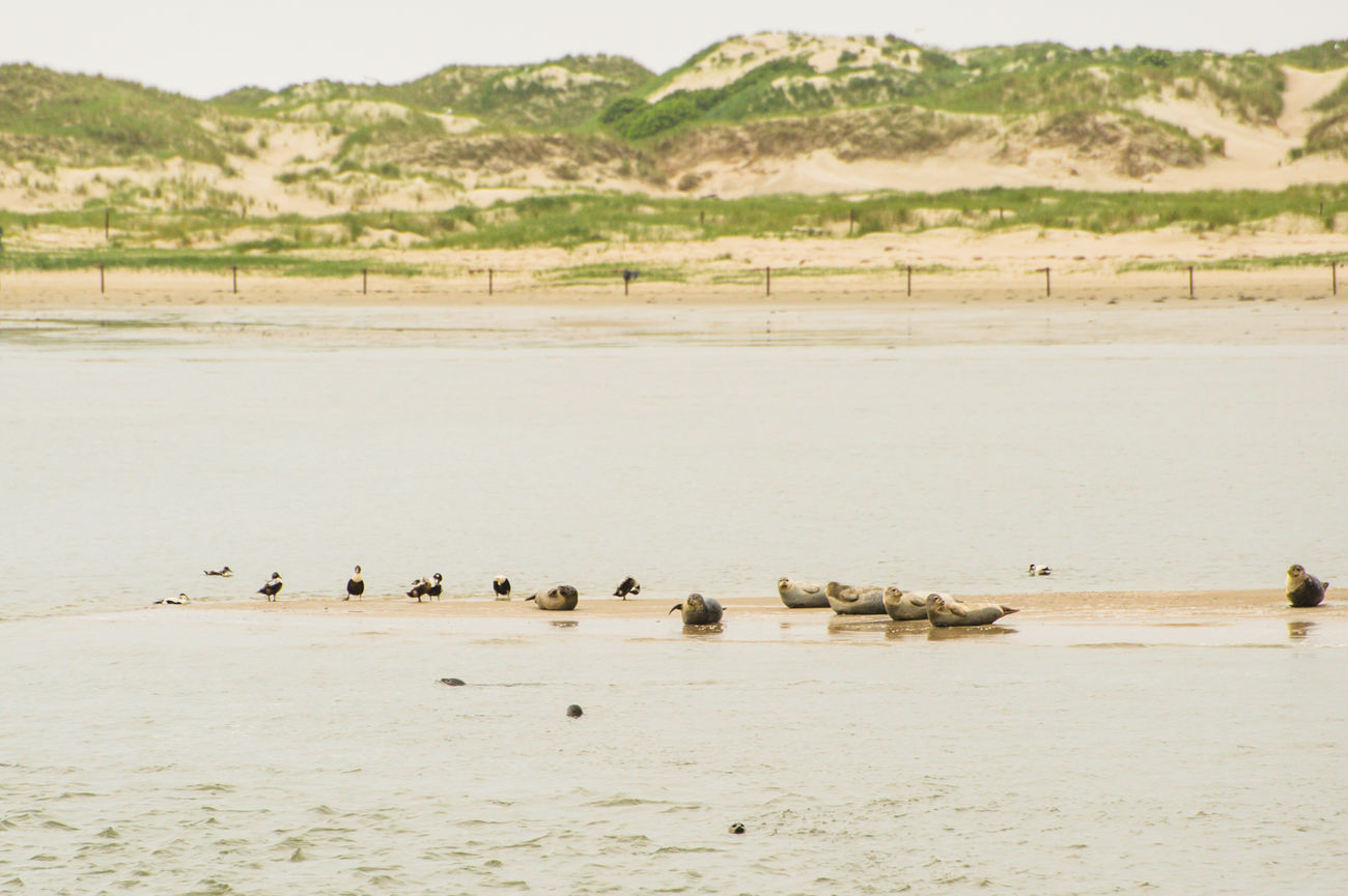 Beautiful stock photos of duck,  Animal Wildlife,  Animals In The Wild,  Aquatic Mammal,  Avian