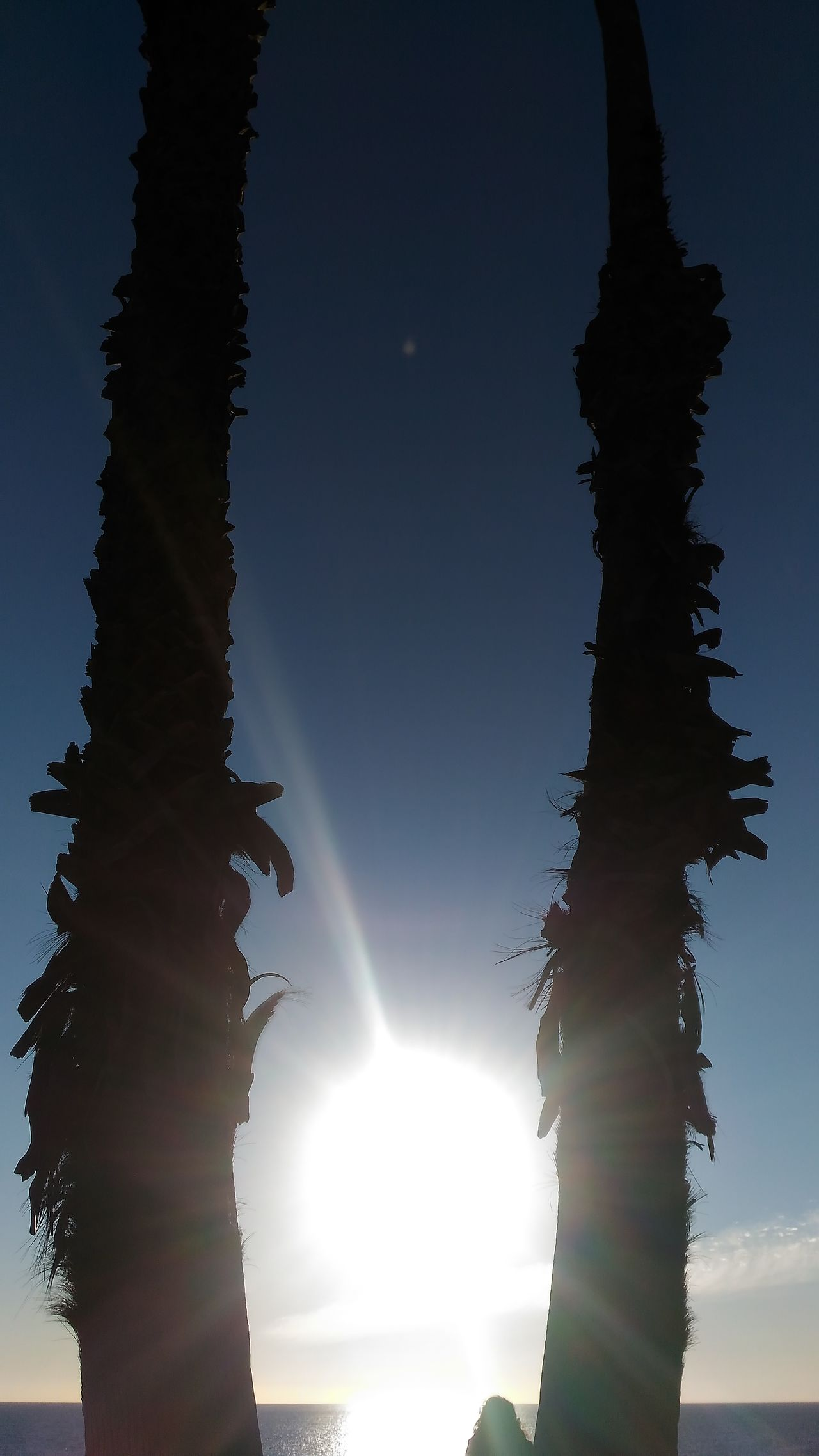 Sunset Lovers Sunset✨trees✨ Enjoying The Sunset EyeEm Best Shots - Sunsets + Sunrise Sunsetphotographs Beautiful Sunset Sunsetlover Sunset_collection Sunset Sunsets Sunset Silhouettes Sunsetporn Beachphotography Beach Beach Life Beachlovers Santa Monica